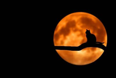復縁ならば満月と黒猫