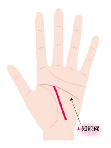中指に向かって伸びる運命線が知能線で止まっている