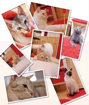 猫カフェ キャッツプラネット