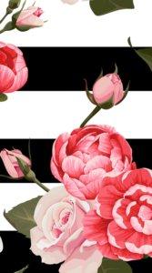 モノクロのボーターをバックにピンク色の薔薇が描かれたインパクトのあるイラスト待受