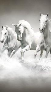 水上をしぶきをあげながら疾走する3匹の白い馬のイラスト待受