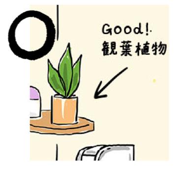 トイレに観葉植物を置くとgood