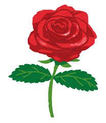 薔薇の写真は風水的に結婚運や恋愛運がアップする
