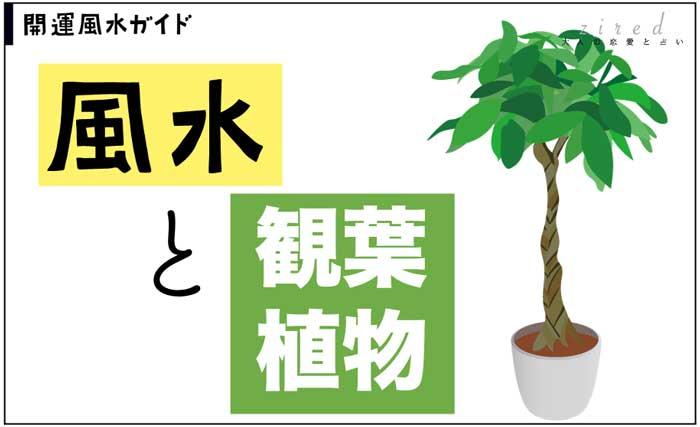 風水によい観葉植物・置く場所の風水効果【完全ガイド】