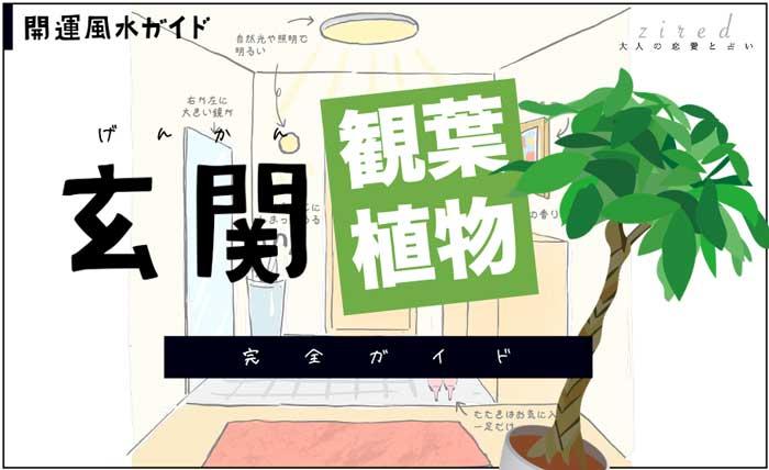 genkan-kanyoushokubutsu