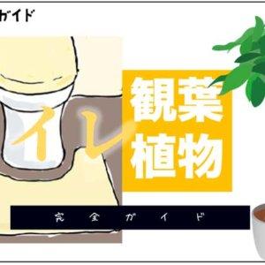 toilet-kanyoushokubutsu